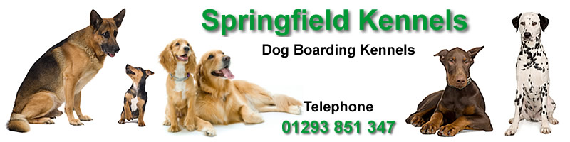 Springfield Dog boarding kennels Horsham